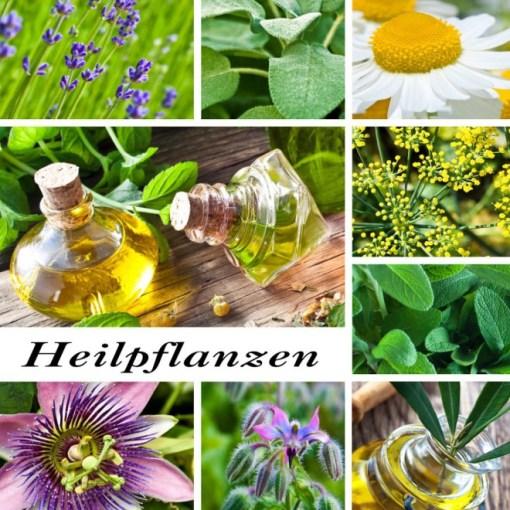 heilpflanzen-1024x1024