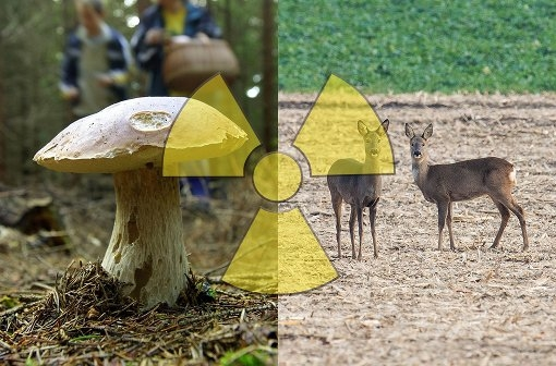 radioaktive-belastung-in-bayern