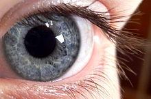 220px-blue_eye