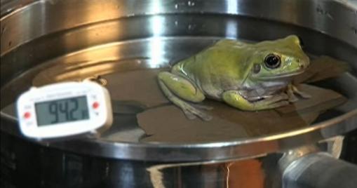 Frosch im Topf 1 (3)